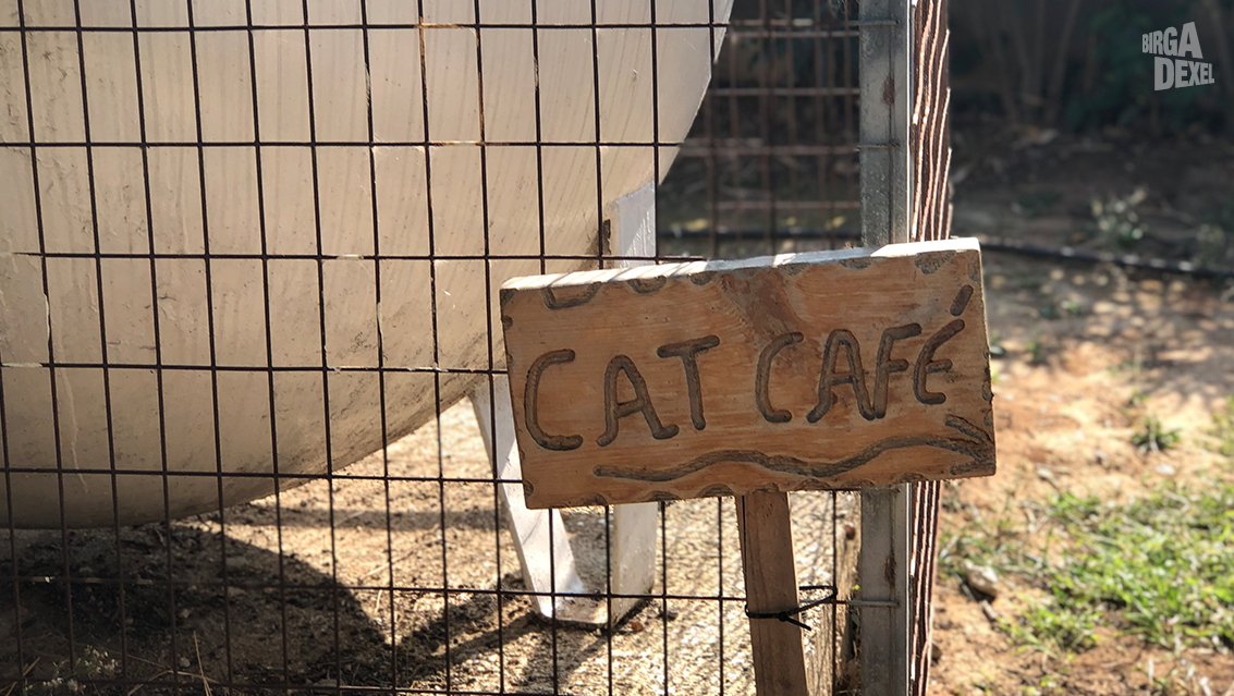 Cat-Cafe-Hotelfutterstelle-von-Cops-Cats-Cats